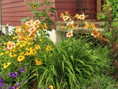 Eyepod in perennial garden zone 3