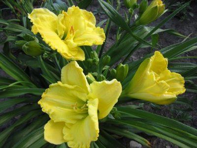 Yukon Spring clump