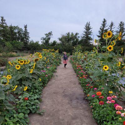 Sorry no photo. Flower garden path.